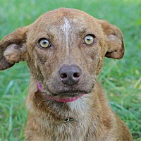 Adopt A Pet :: Misty - Waldorf, MD