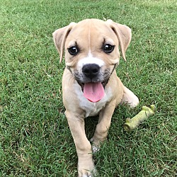 woof river animal rescue Memphis, Tennessee - dogs and puppies for adoption from WOOF RIVER ...