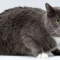 Adopt A Pet :: Serge - Santa Fe, NM