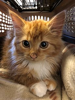 Adopt A Pet :: Isolde  - Moose Jaw, SK