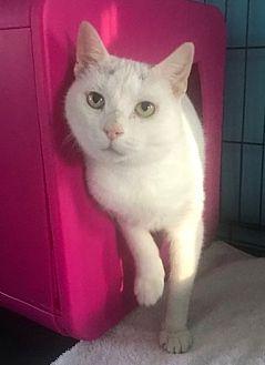 Adopt A Pet :: Winter  - Devon, PA