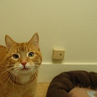 Adopt A Pet :: Wynona - Milwaukee, WI