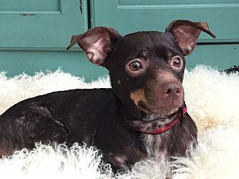 Adopt A Pet :: Perfect Little Guy!!  - Ft Myers Beach, FL