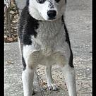 Adopt A Pet :: Keva