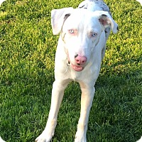 Adopt A Pet :: Theo - Deaf - Post Falls, ID