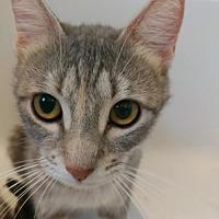 Adopt A Pet :: Nova 3 - Austin, TX