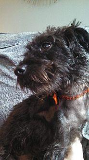 Adopt A Pet :: Oreo  - Renton, WA