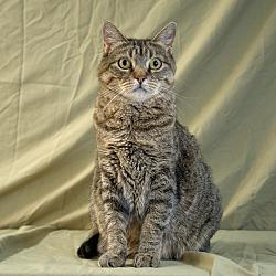 June S Senior Cat Rescue In Albuquerque New Mexico