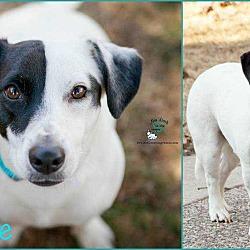 Basset Hound Puppies In Wisconsin