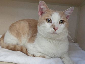 Adopt A Pet :: Mulligan  - Laramie, WY