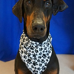Michigan Humane Society - Sterling Heights Petco in Sterling Heights