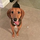 Adopt A Pet :: Henry