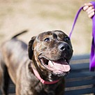 Adopt A Pet :: Mari