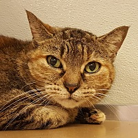 Adopt A Pet :: Elsa Mimi - Grayslake, IL