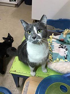 Adopt A Pet :: Ajax  - Blasdell, NY