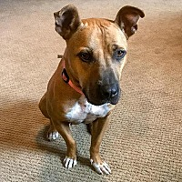 Adopt A Pet :: Maggie May - ADOPTION PENDING!! - Vienna, VA