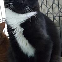 Adopt A Pet :: Sox - Key Largo, FL