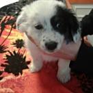 Adopt A Pet :: Tessa (has been adopted)