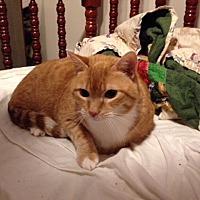 Adopt A Pet :: Reagan (COURTESY POST) - Baltimore, MD
