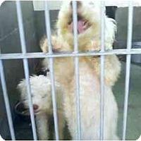 Adopt A Pet :: John and Wayne - Riverside, CA
