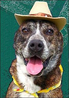Adopt A Pet :: Randy  - Simsbury, CT