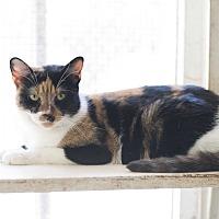 Adopt A Pet :: Lady Argyle - Houston, TX