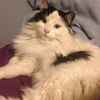 Adopt A Pet :: Abby - Incline Village, NV