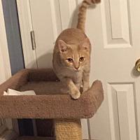Adopt A Pet :: Sarge151678 - Atlanta, GA