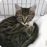 Adopt A Pet :: Demi - Bunnell, FL