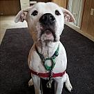 Adopt A Pet :: Cappy