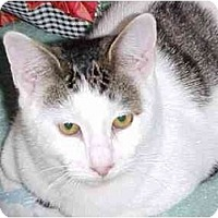 Adopt A Pet :: Fritzy - Quincy, MA