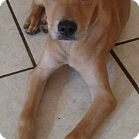 Adopt A Pet :: Sonny - Tampa, FL