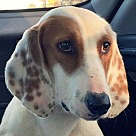 Adopt A Pet :: Donovan *Adoption Pending*