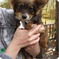 Adopt A Pet :: Hannah - Houston, TX