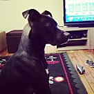 Adopt A Pet :: Magnificent 7 Khal/Milo