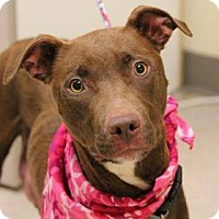 Adopt A Pet :: Wilma - Lebanon, CT