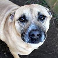 Adopt A Pet :: Bill - Memphis, TN