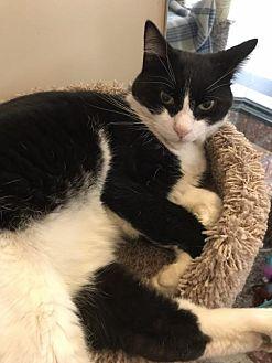 Adopt A Pet :: Retread  - Blasdell, NY