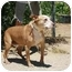 Photo 3 - Bull Terrier Mix Dog for adoption in California City, California - Chelsea