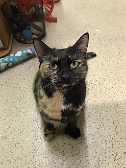 Adopt A Pet :: Dahlia  - Blasdell, NY