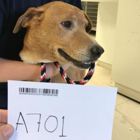 A7-01-Annabell