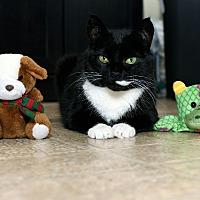 Adopt A Pet :: Sheba - Wayne, NJ