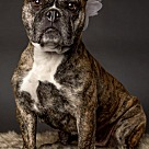 Adopt A Pet :: Belle-Not at the shelter