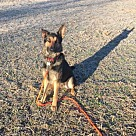 Adopt A Pet :: Kovu