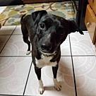 Adopt A Pet :: William Adoption Pending!