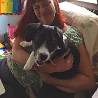 Adopt A Pet :: Gracelyn - Normal, IL
