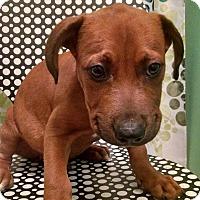 Adopt A Pet :: Sam - Tampa, FL