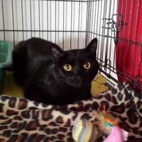 Adopt A Pet :: Rhea - Winona, MN