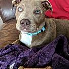 Adopt A Pet :: J.J
