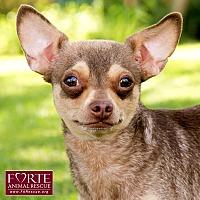 Adopt A Pet :: Jojo - Marina del Rey, CA